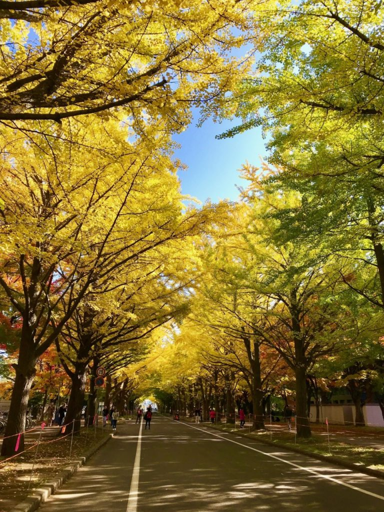 秋の札幌観光~紅葉の旅