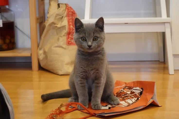 わが家のまねき猫 & 昨日のワークショップ